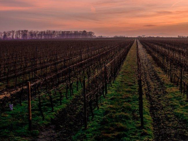 Bombeo de agua con energia solar en agricultura